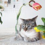 Chiedilo al Tulimarito: gatto al forno