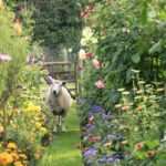 Il favoloso giardino di Maggie